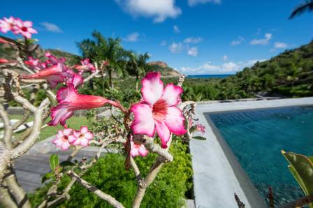20181020-ExoticEstates_CaribbeanTours_ShanonSearls-11-1